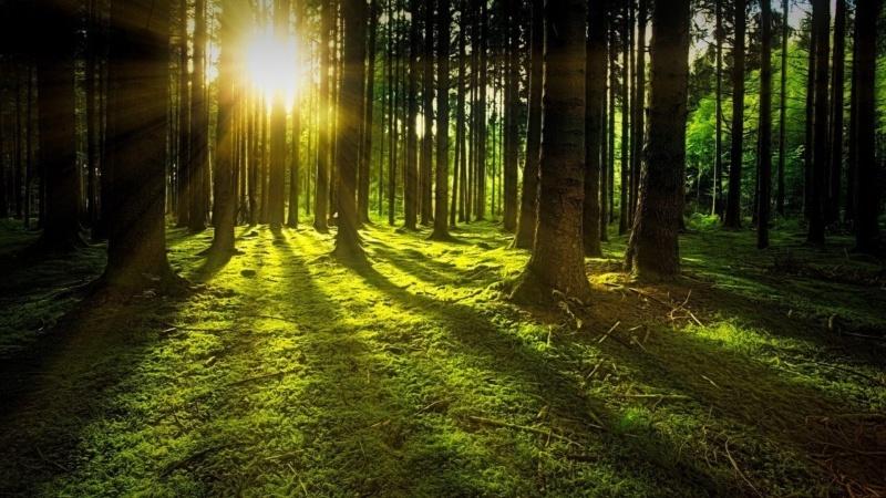 木の影から太陽が覗いている画像